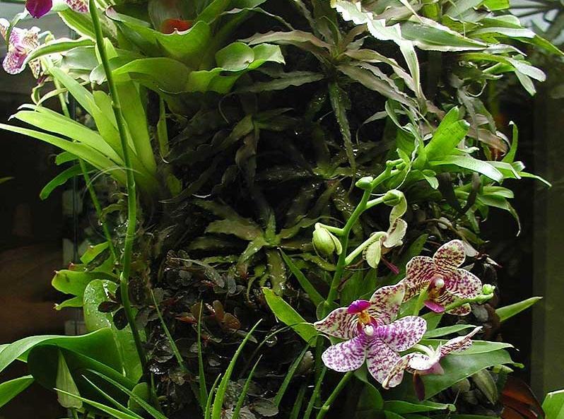 orchidariumas-int.JPG